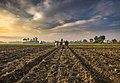 Farming India (202929337).jpeg