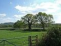 Farmland near Melbury Osmund - geograph.org.uk - 405875.jpg