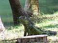 Fauna - panoramio (6).jpg