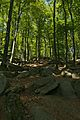 Felsenmeer Wald und Felsen2.jpg