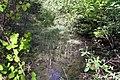 Feuchtgebiet Oberholz I 07.jpg