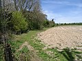 Field boundary with Down Wood - geograph.org.uk - 785998.jpg