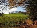Field near Aish - geograph.org.uk - 1061741.jpg
