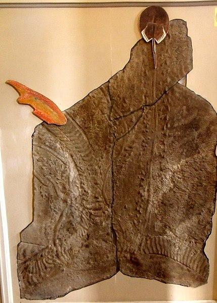 File:First known animal tracks on land (24279487891).jpg