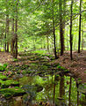 Flickr - Nicholas T - Old Loggers Path (4).jpg