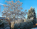 Flickr - ronsaunders47 - BLUE SKIES AND WHITE TREES.1.jpg