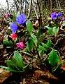 Flora 17 Slovakia.jpg