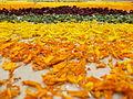 Floral Rangoli.JPG