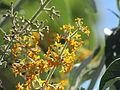 Flores en el Jardín Botánico de Viña del Mar 18.JPG