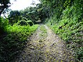 Flower-Strewn Path - San Miguel - Peten - Guatemala (15837118346).jpg