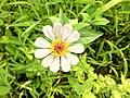 Flower 18.jpg