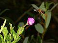 Flower Attack (2768822092).jpg