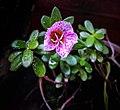 Flower pink2.jpg