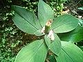 Flowering plant.jpg