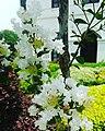 Flowers1996.jpg