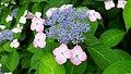 FlowersTokioPark.jpg