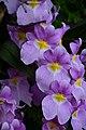 Flowers (32309603418).jpg