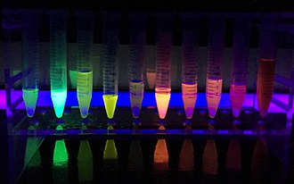 Green fluorescent protein - Different proteins produce different colors when exposed to ultraviolet light.