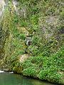 Fonts del riu Glorieta a Mont-ral P1260706.jpg