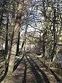 Footpath alongside Rookhope Burn - geograph.org.uk - 728435.jpg