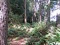 Footpath in Greatgate Wood - geograph.org.uk - 230544.jpg
