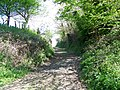 Footpath near Old Dilton - geograph.org.uk - 1282836.jpg
