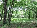 Forêt de Buzet 2014-05-08T14-46-43.jpg