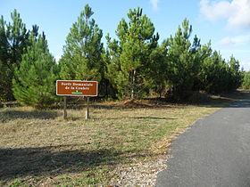 Forêt Domaniale De La Coubre Wikipédia