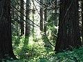 Forest (41e28eeb8f314817adca8855ae7679c9).JPG