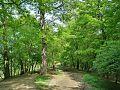 Forest - panoramio - paulnasca (12).jpg
