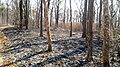 Forest Fire @ Wayanad Wildlife Sanctuary, Muthanga Range - panoramio (7).jpg
