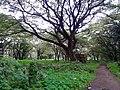 Forest Near Old Railway Station Ernakulam 03.jpg