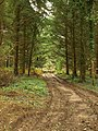 Forest track near Coalway - geograph.org.uk - 965593.jpg