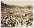 Fotografi från Olympia, Grekland - Hallwylska museet - 104600.tif