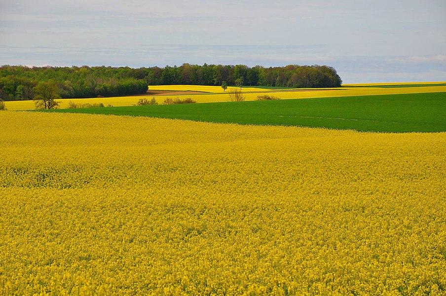 Spring around Foucaucourt-sur-Thabas (Canton Seuil-d'Argonne, Meuse department, Lorraine region, France).
