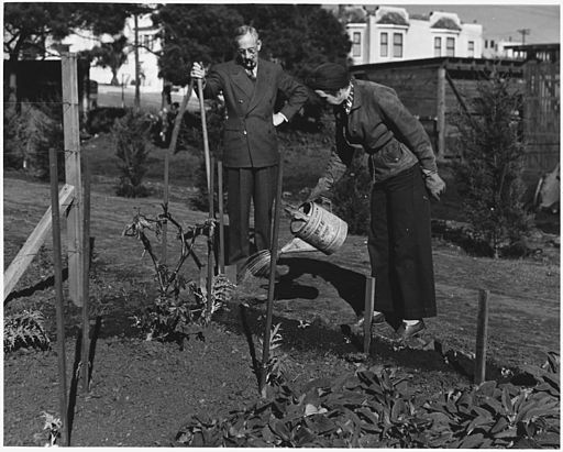 Frequent Watering of the Victory Garden Is Necessary During the Early Stages of Growth. ca. 02-1943 (4545457771)
