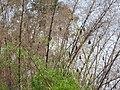 Fruit bats-1-bangalore-India.jpg