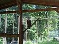 Gänsegeier im Wildpark - panoramio.jpg