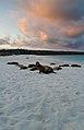 Galápagos sea lions (4228234719).jpg