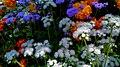 Garden (248141003).jpeg