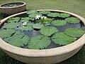 Gardenology.org-IMG 7364 qsbg11mar.jpg