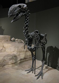 Gastornis, a large flightless bird from the Eocene of Wyoming.jpg