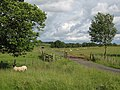 Gated road near Woodpark Farm - geograph.org.uk - 489439.jpg