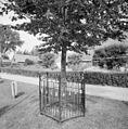 Gedenkboom Beatrix - Hekendorp - 20374542 - RCE.jpg