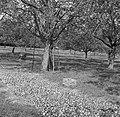 Geoogste appels, Bestanddeelnr 252-0221.jpg