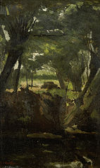 View in the Woods