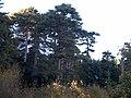 Giganti della Sila - panoramio.jpg