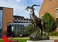 Gompei the Goat, Worcester Polytechnic Institute (WPI) mascot.jpg