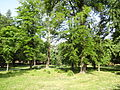 Gradski Park-Skopje (108).JPG