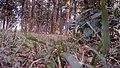 Grass level - panoramio.jpg